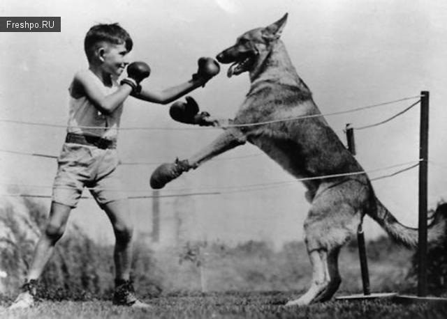 Бокс мальчика с собакой