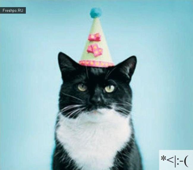 Котосмайлики или сопостовление фотографий кошек привычным нам смайликам!