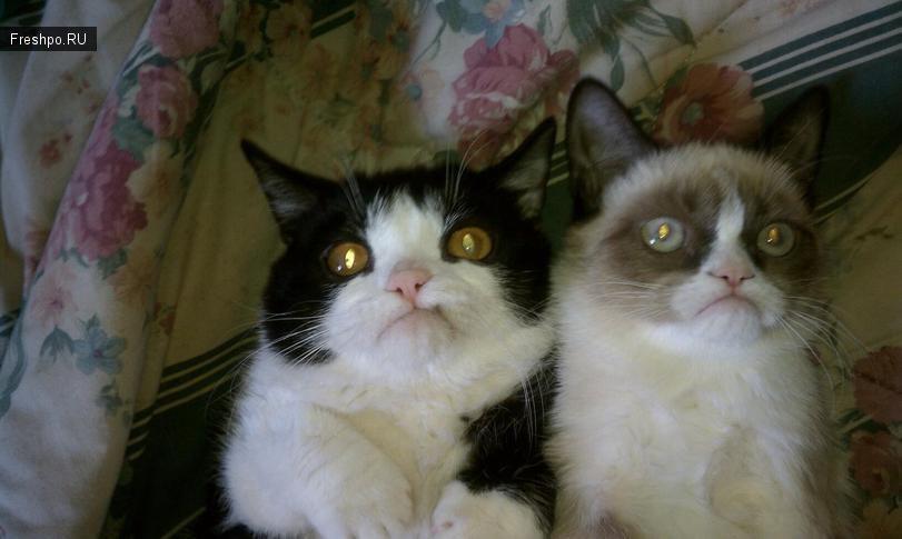 Самый скептический, хмурый и грустный серый кот!