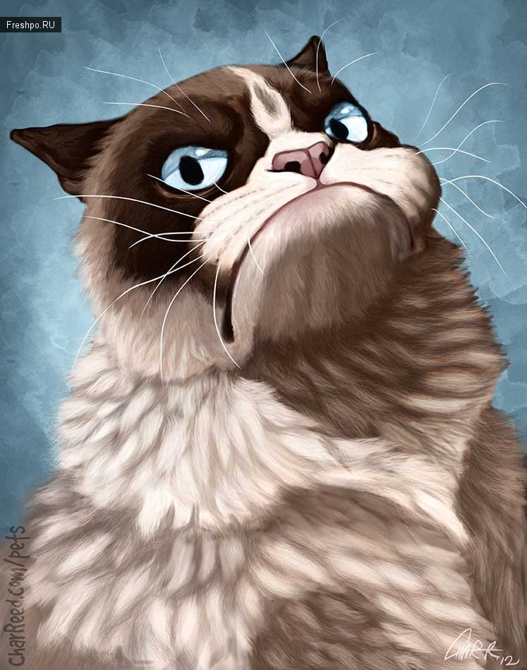 Самый скептический и хмурый серый кот!