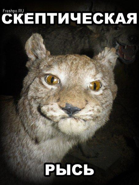 Самый скептический, хмурый и грустный серый кот! - друг рысь