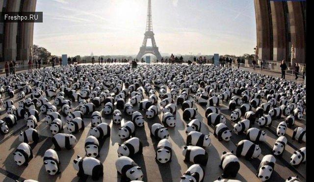 Множество игрушечнх панд на полях в Париже