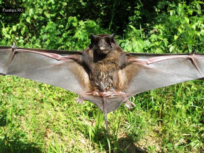 Как поймать летучих мышей или смотрим мини-бэтмэнов с очень близкого расстояния!