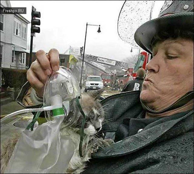 Эмоциональные фотографии - пожарники спасают домашних животных из горящих домов.