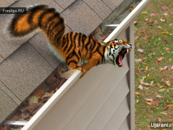 Чудо животное, выращенное в пробирке фотошопа - белко тигр или тигро -белка