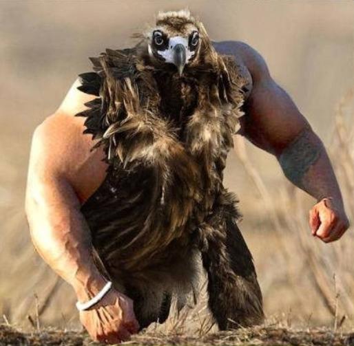 Птицы как люди - лучшая обработка фотографий в фотошопе