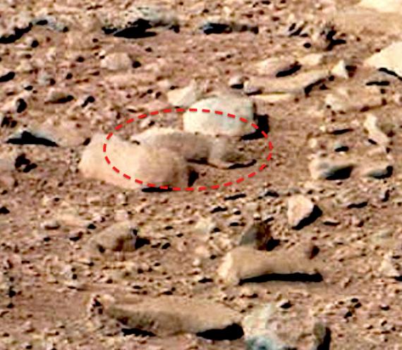 Грызуны на марсе! Почему NASA молчат?