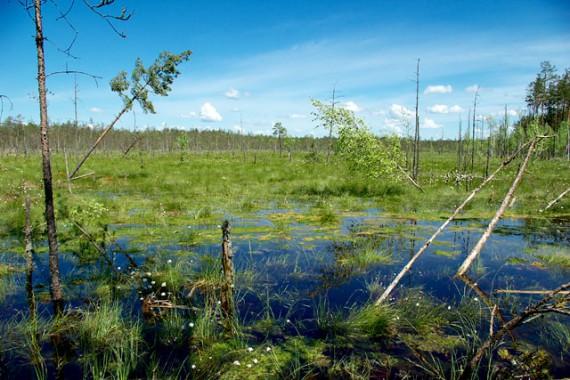 Чем полезны болота?