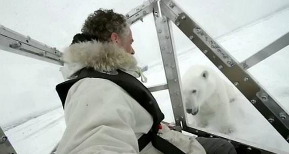 Нападают ли полярные медведи на людей?