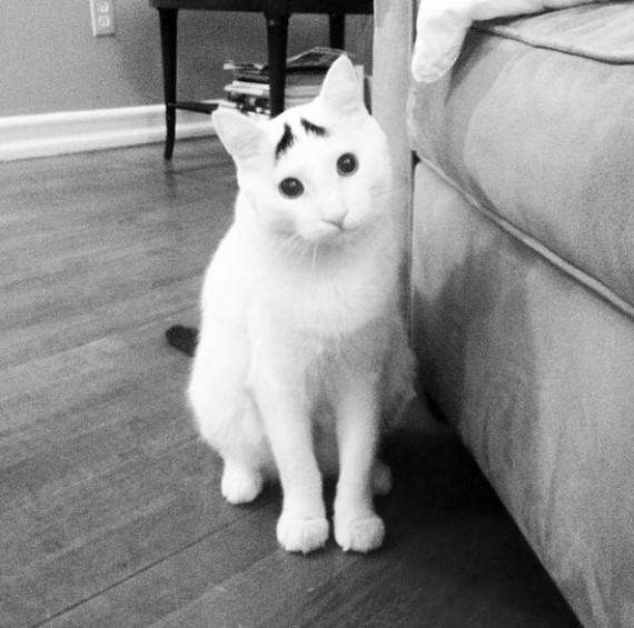 Прикольные фотографии белого кота с черными бровями