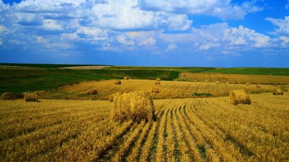 Какие боги на Руси покровительствовали сельскому хозяйству?