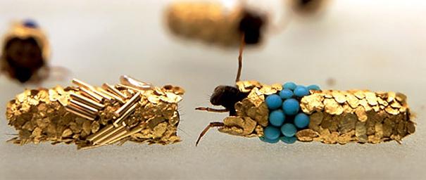 Необычные личинки, которые строят свои дома из золота и драгоценных металлов