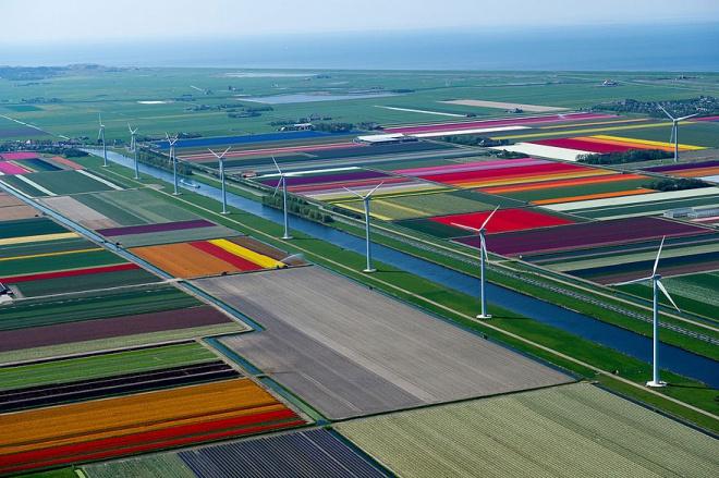 Разноцветныме поля в Нидерландах - вид из кабины самолета