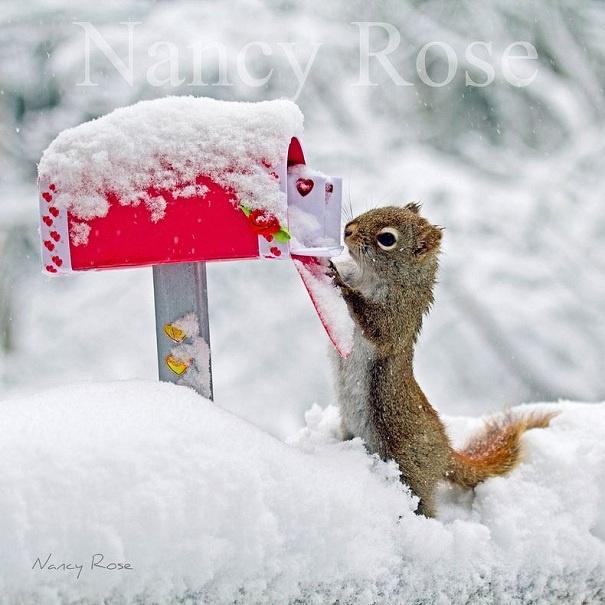 Фотосессия симпатичной белки, занятой повседневными делами ©Nancy Rose