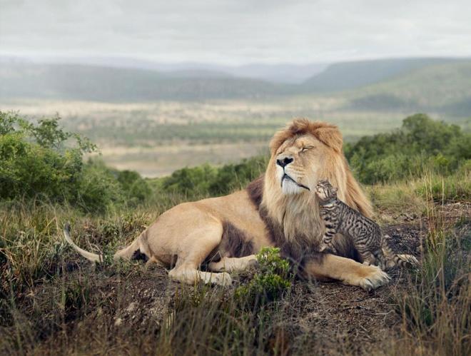 Домашние кошки стали хищниками в дикой природе